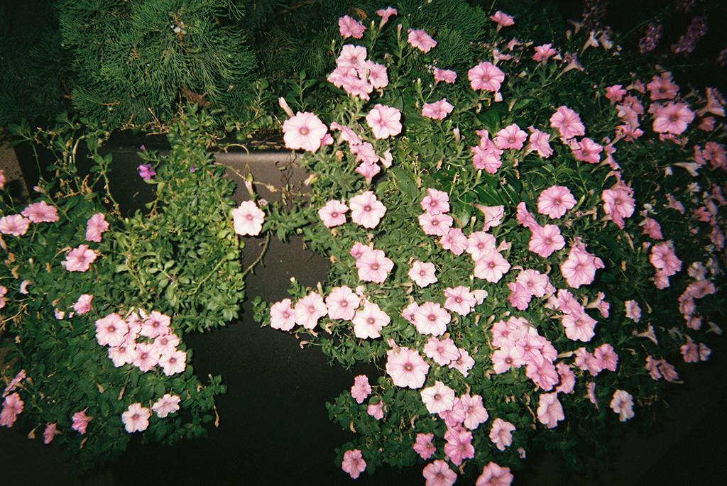 Bloom     I just thought the flowers were pretty.      Florece   Las flores se ven muy lindas.