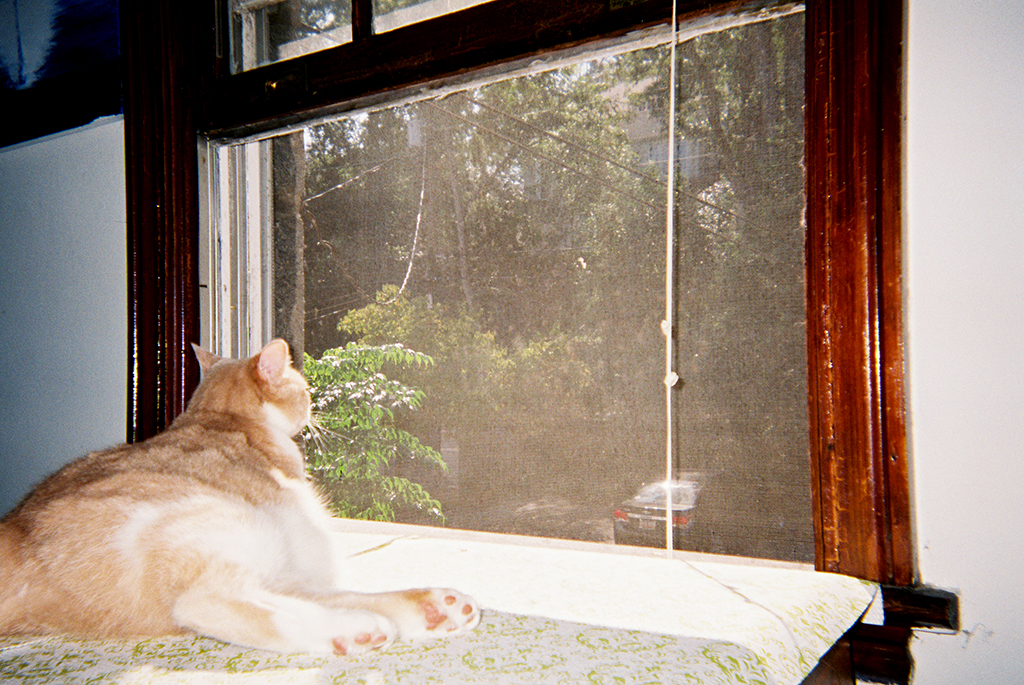 The Simple Life     Cat life.      La vida buena   La vida de gato