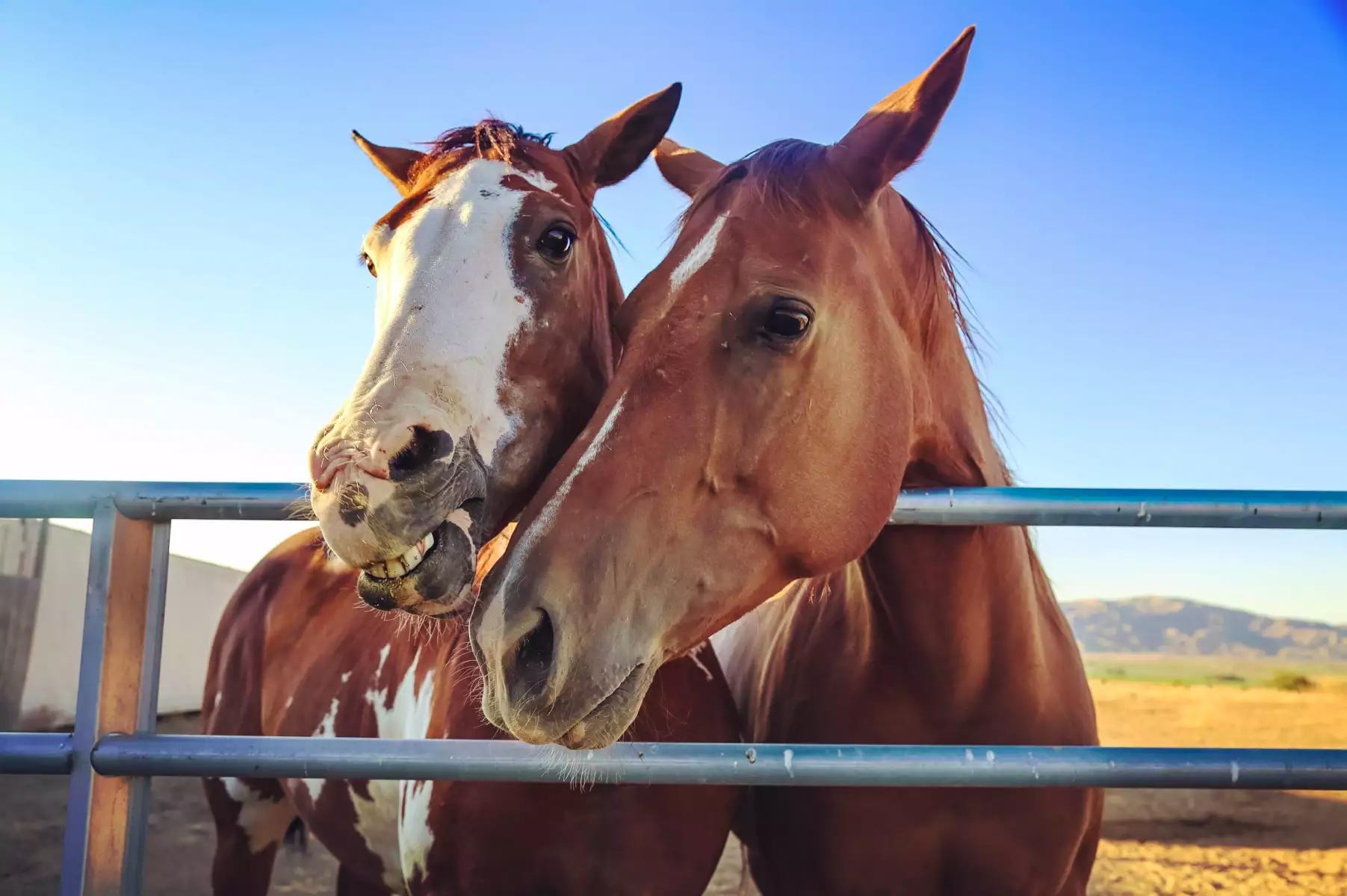 Horseback Riding with Emery Johnston
