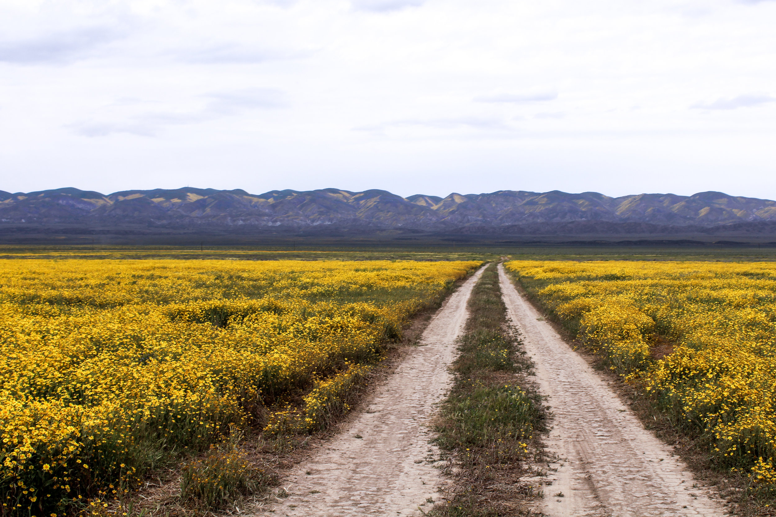 Carrizo Plain National Monument Recreation Guide