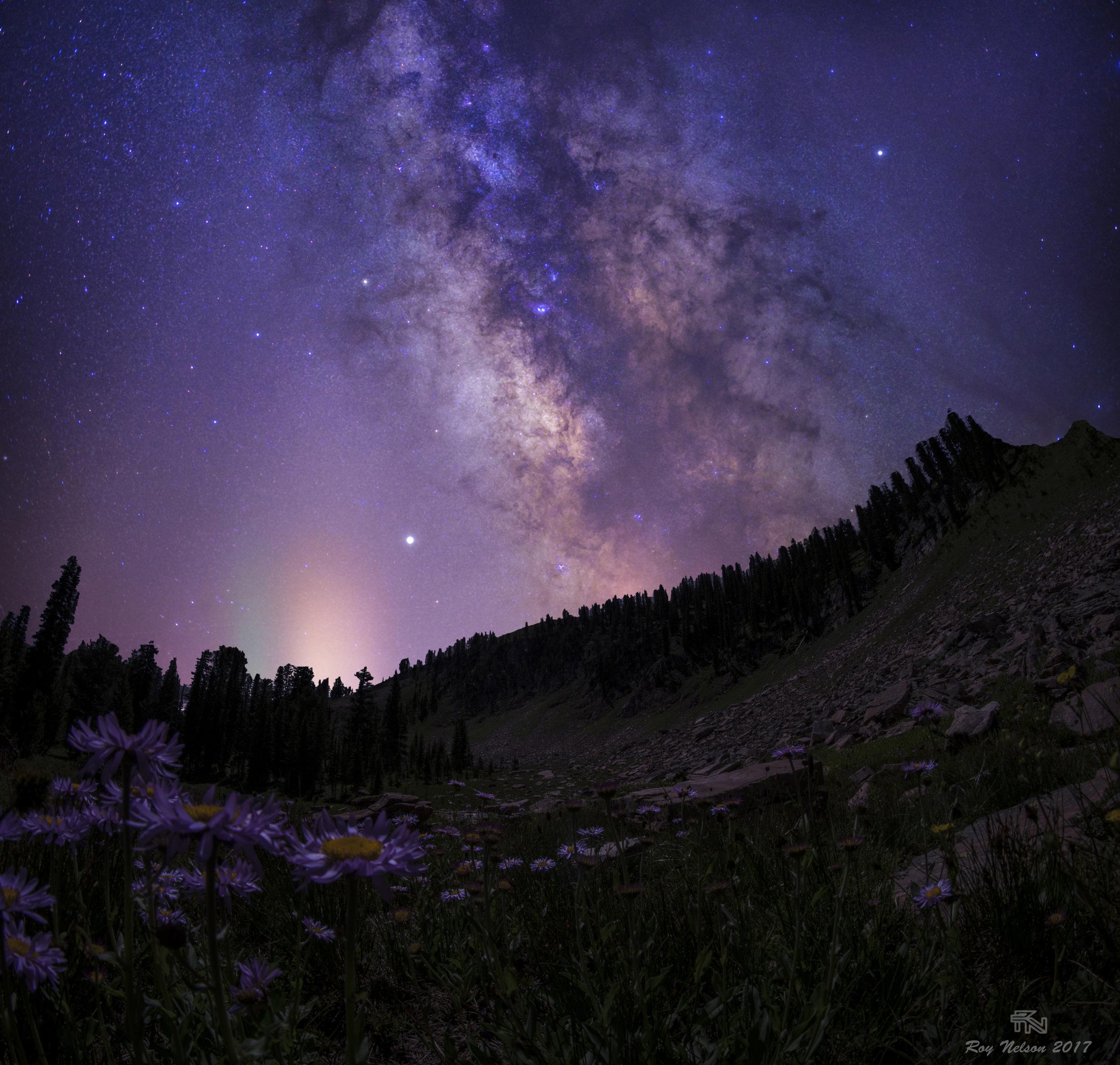 'Starlight'