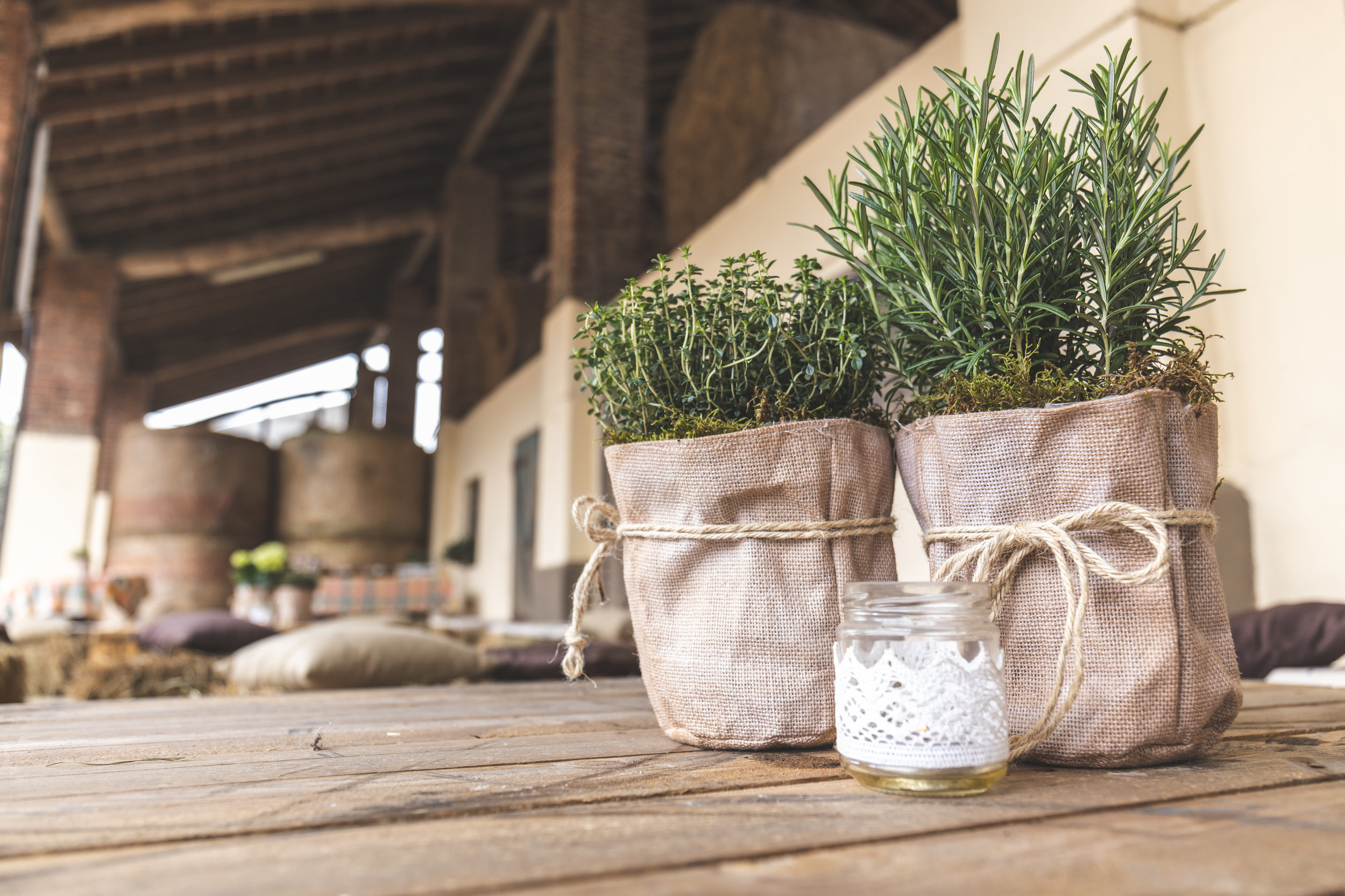 Gardenalia Tip: - As with all container gardens or potted plants, it's imperative to keep your eyes open for drainage holes. Those impressive containers on your local store's shelves might lack adequate drainage, ultimately causing damage to root systems. Below are a few container gardens that we've designed (proper drainage and all)!Rosemary is a great plant to have in the kitchen on a window sill for a quick evening snip, and as it's Mediterranean in origin, it will need the sun and preferably southern window exposure. Also, keep in mind, over-watering this plant can damage the base of the roots, so let it dry thoroughly. And lastly, Rosemary is super simple to propagate, and sometimes roots will develop even in a glass of water on a sunny windowsill, so snip a bit off, and give one to a friend who loves to cook, they'll thank you for it!