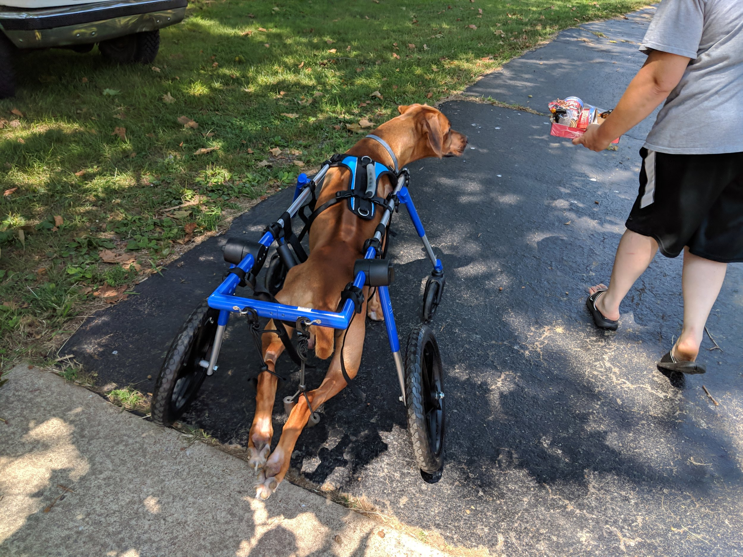 August 28, 2018: Thank you for this awesome service you do.  Archer is learning still but he is happy getting to be outside.