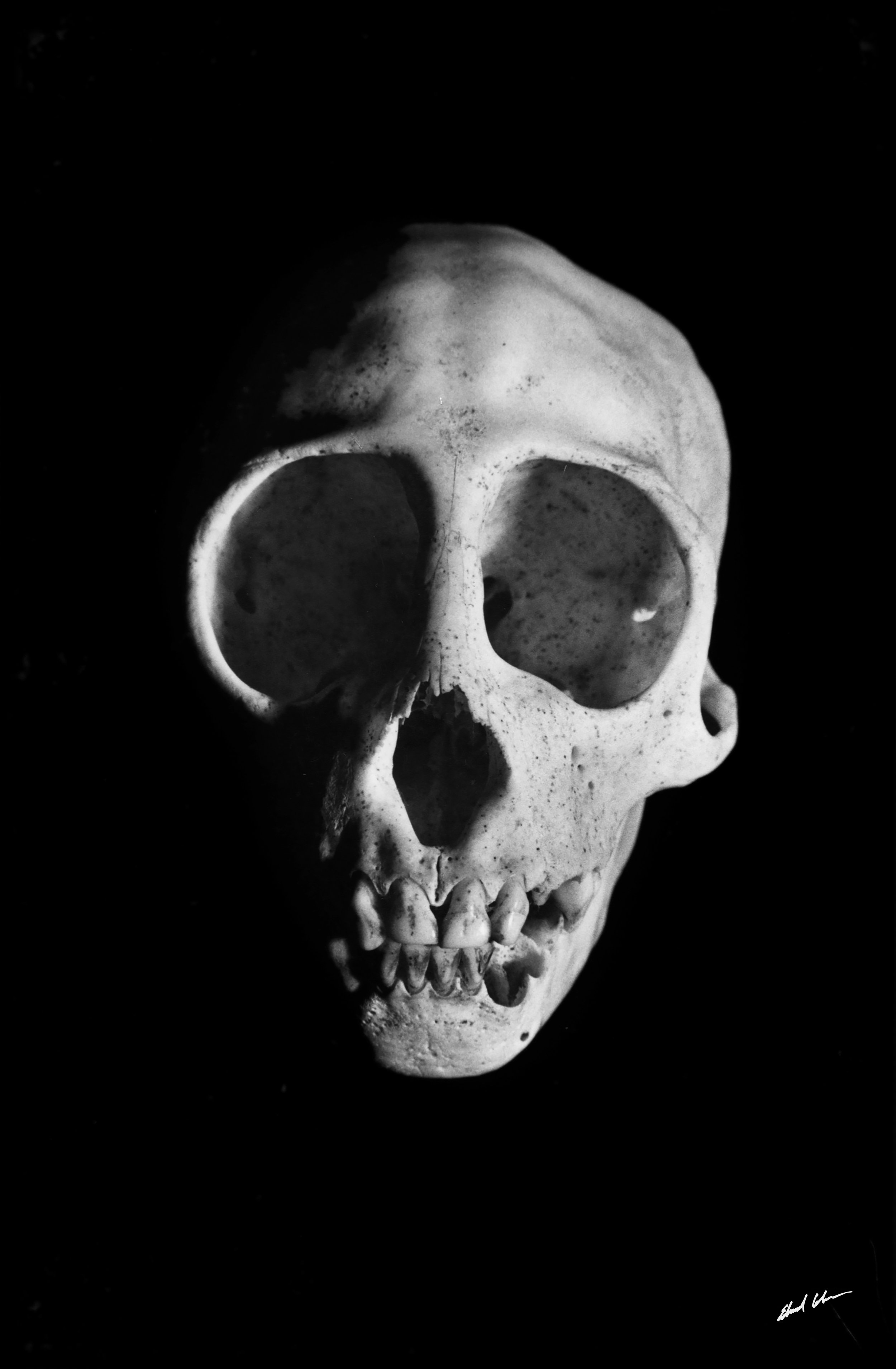 "Monkey Skull   ""Taken at my Hollywood Studio with my 4x4 camera, making an extremely detailed image. Seems like a human skull but it's not."""