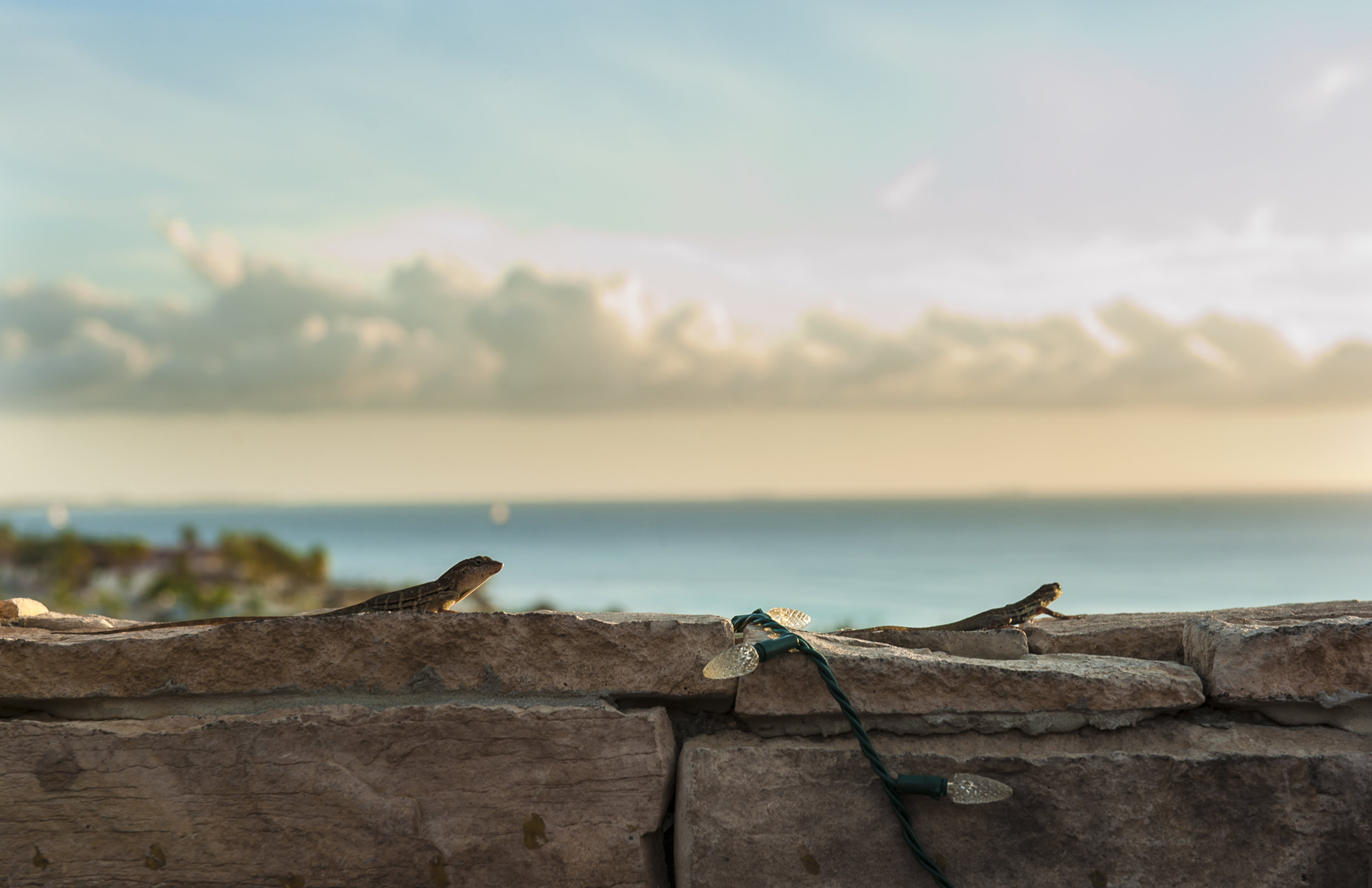 Aruba Lizards 11x17 - mark campbell photography-001.jpg