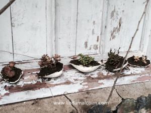 new succulents