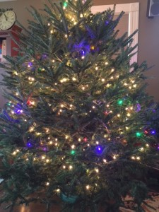 rotund Christmas tree