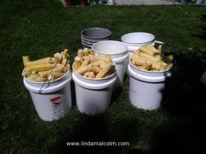 14 buckets of cobs