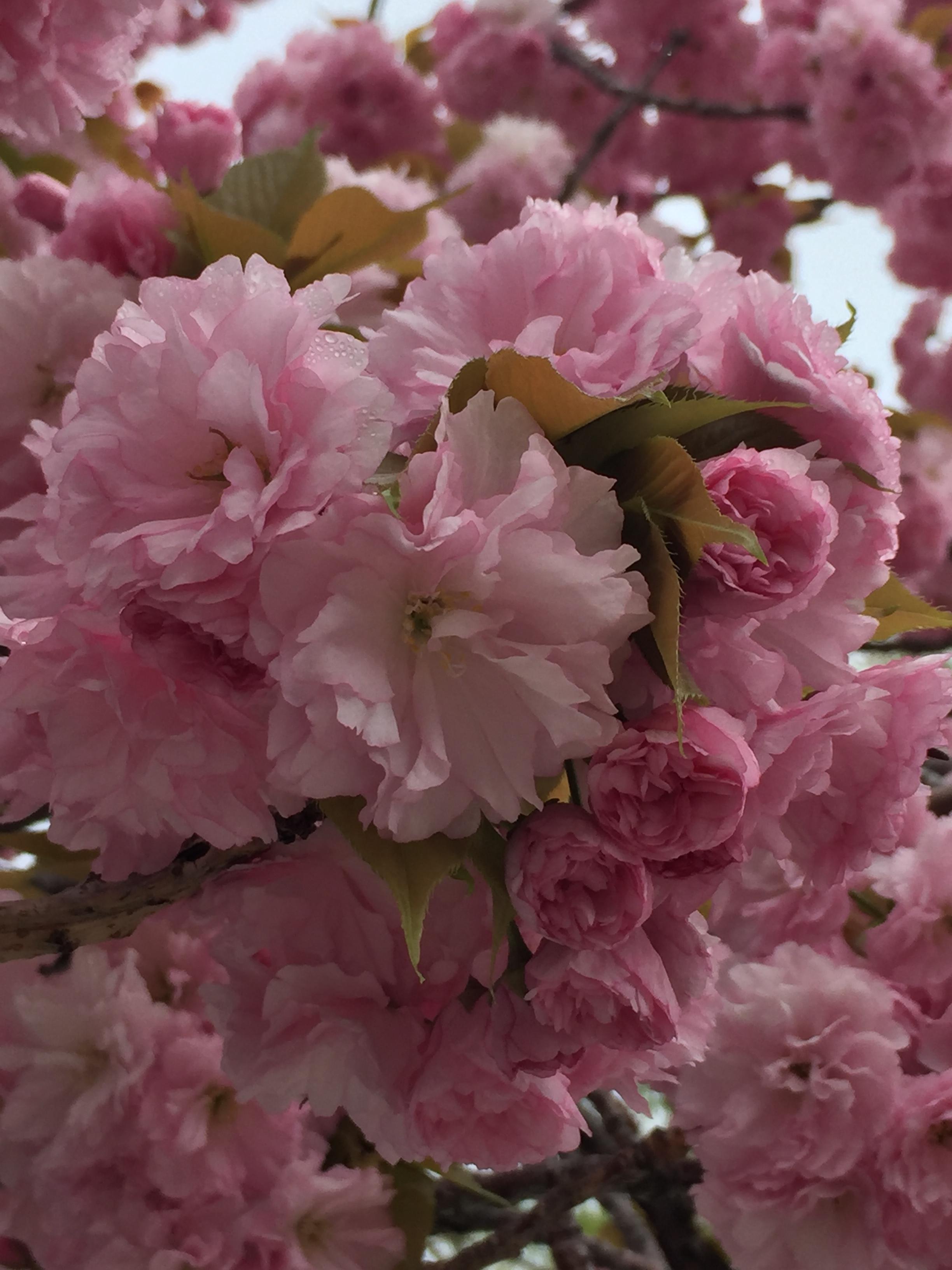 spring_flower_2.jpeg