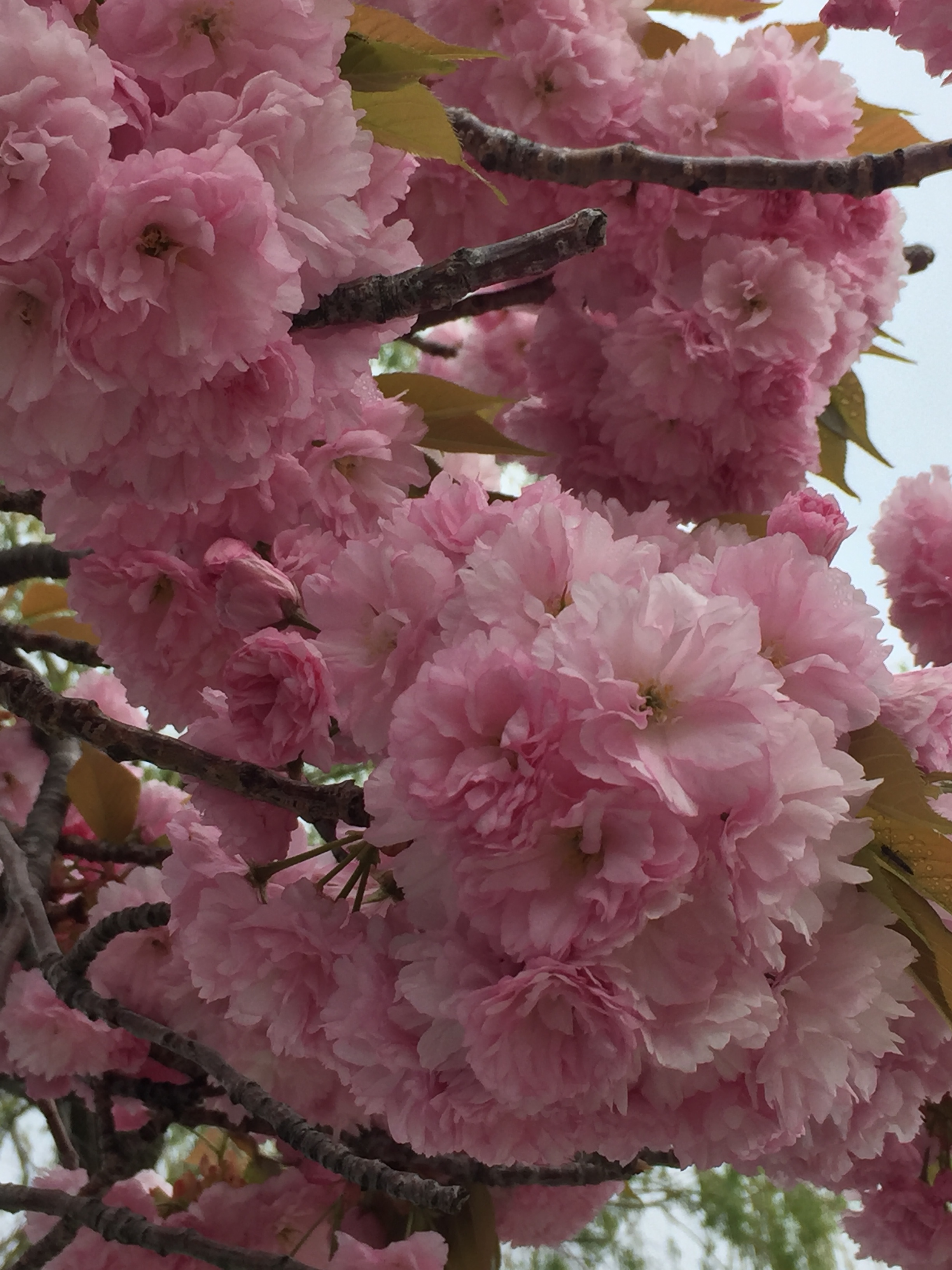 spring_flower_4.jpeg
