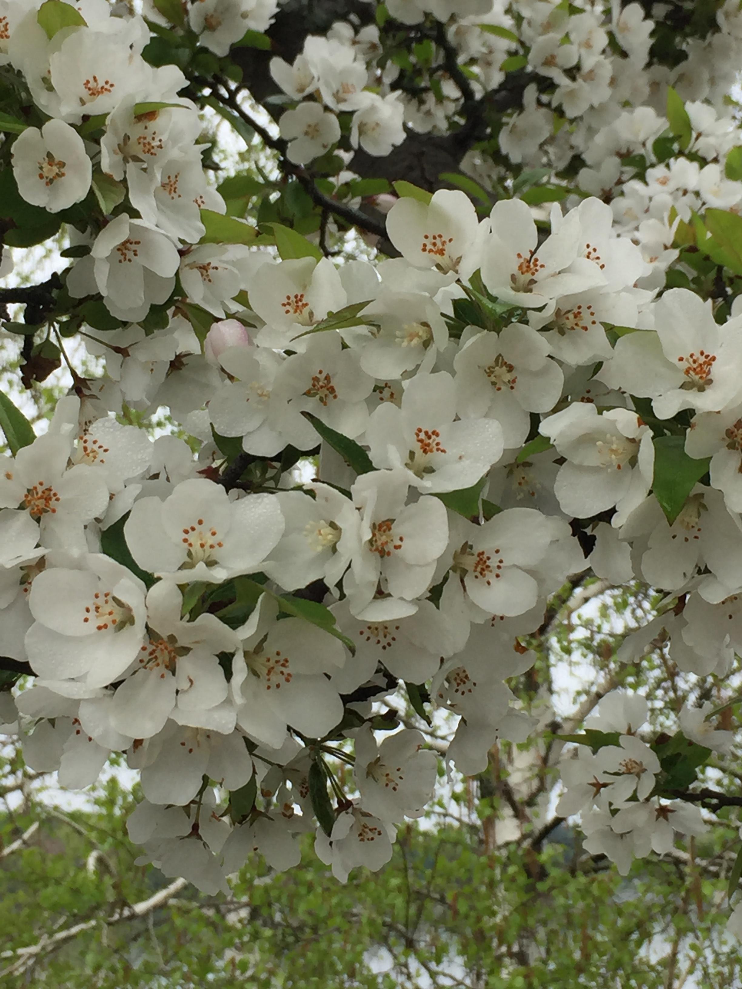 spring_flower_5.jpeg