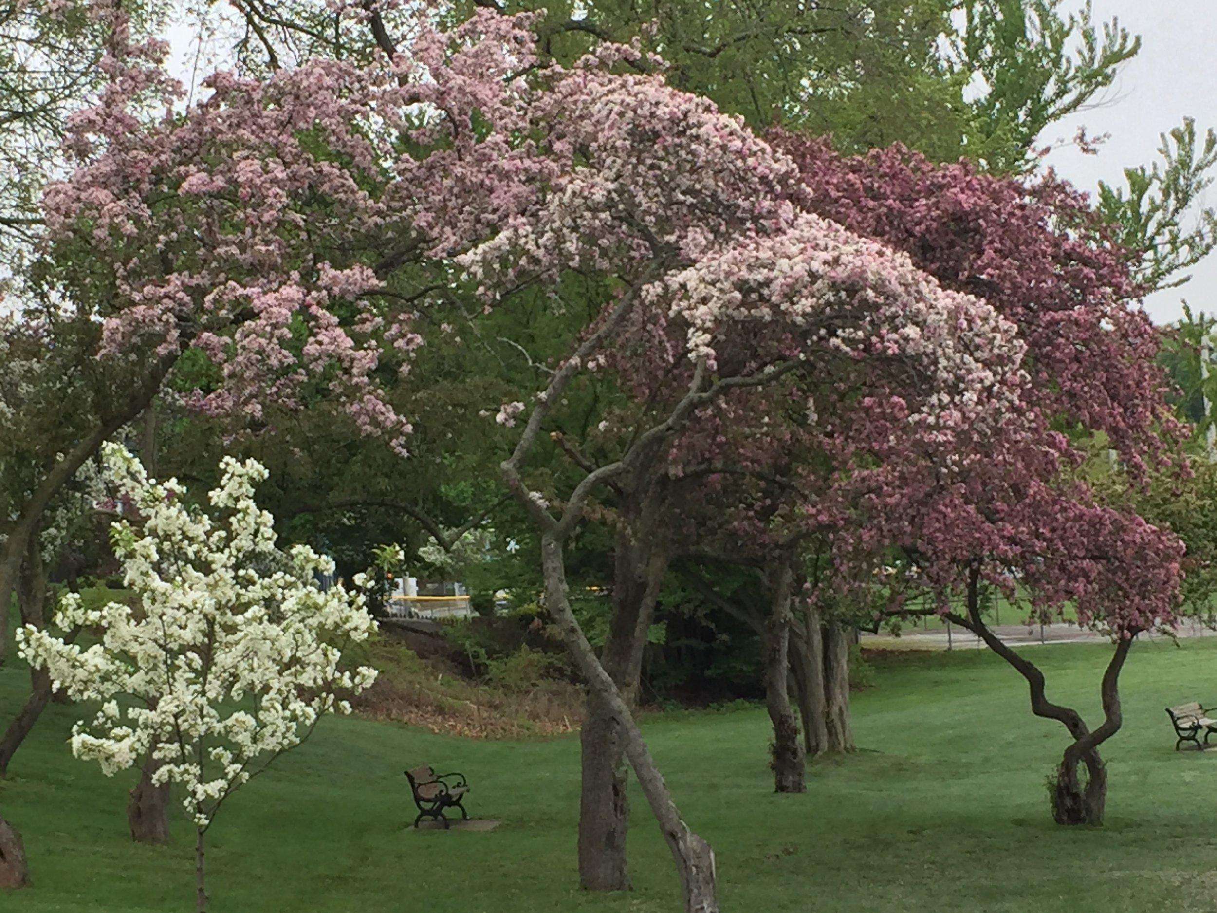 spring_flower_7.jpeg