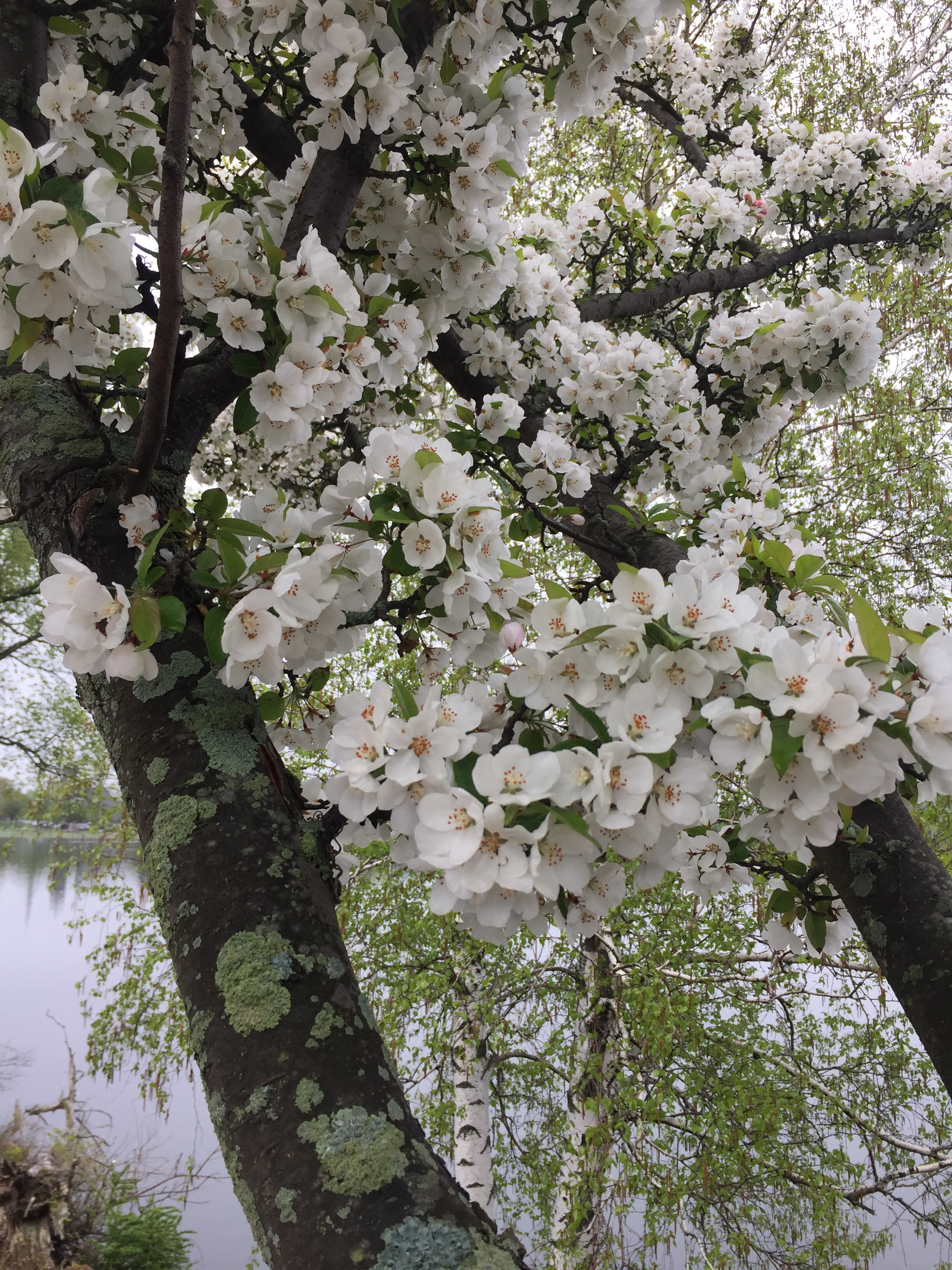 spring_flower_8.jpeg