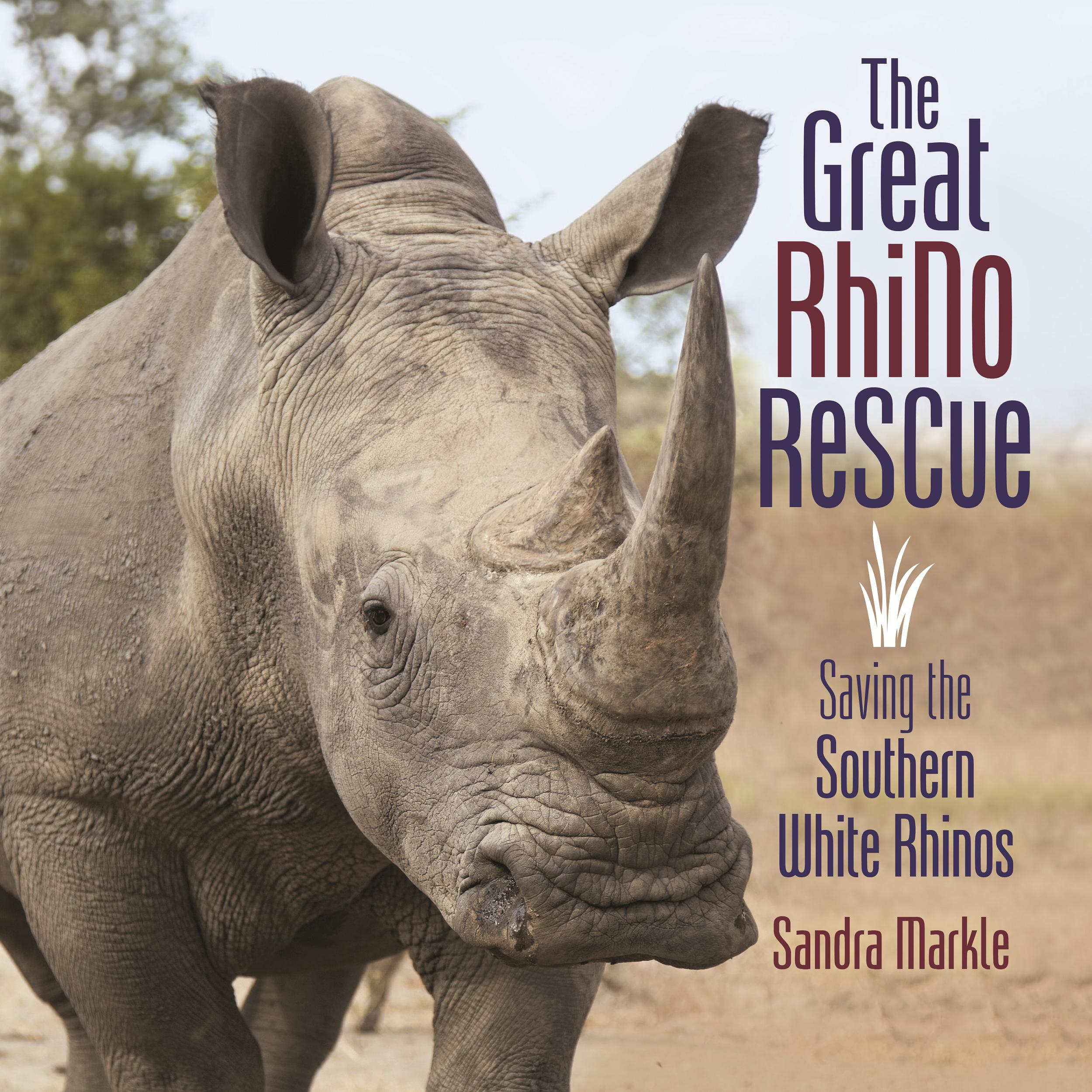 Great Rhino.png