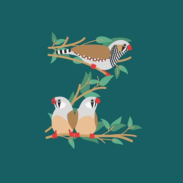 Z, is for Zebra Finch - 36days of type #4. This year I decided to go with a single theme, birds of a feather. Finally finished it  #Zebrafinch #finch #bird #decorative #letterform #type #thedailytype #36daysoftype04 #36days_Z #shillolon #thiscreativelife #illustration #vector #fisforfox