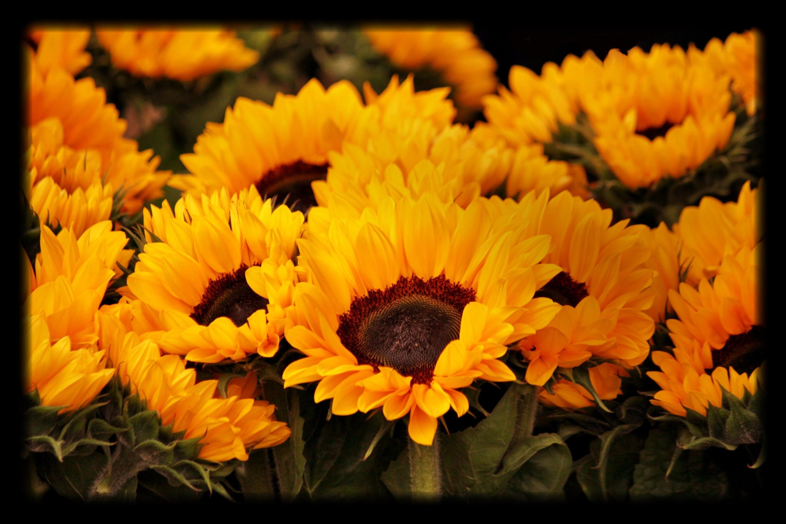 bloom-blur-close-up-54267.jpg