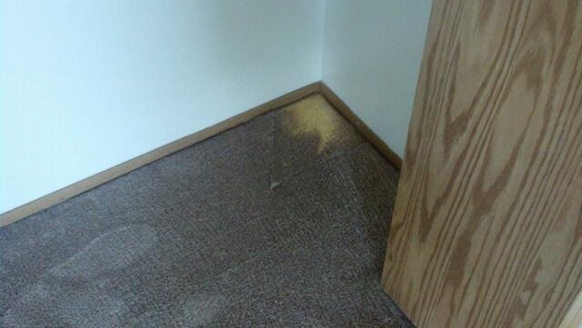 closet carpet