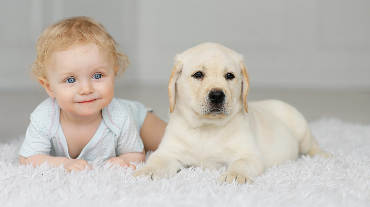 dogs-and-babies-header.jpg