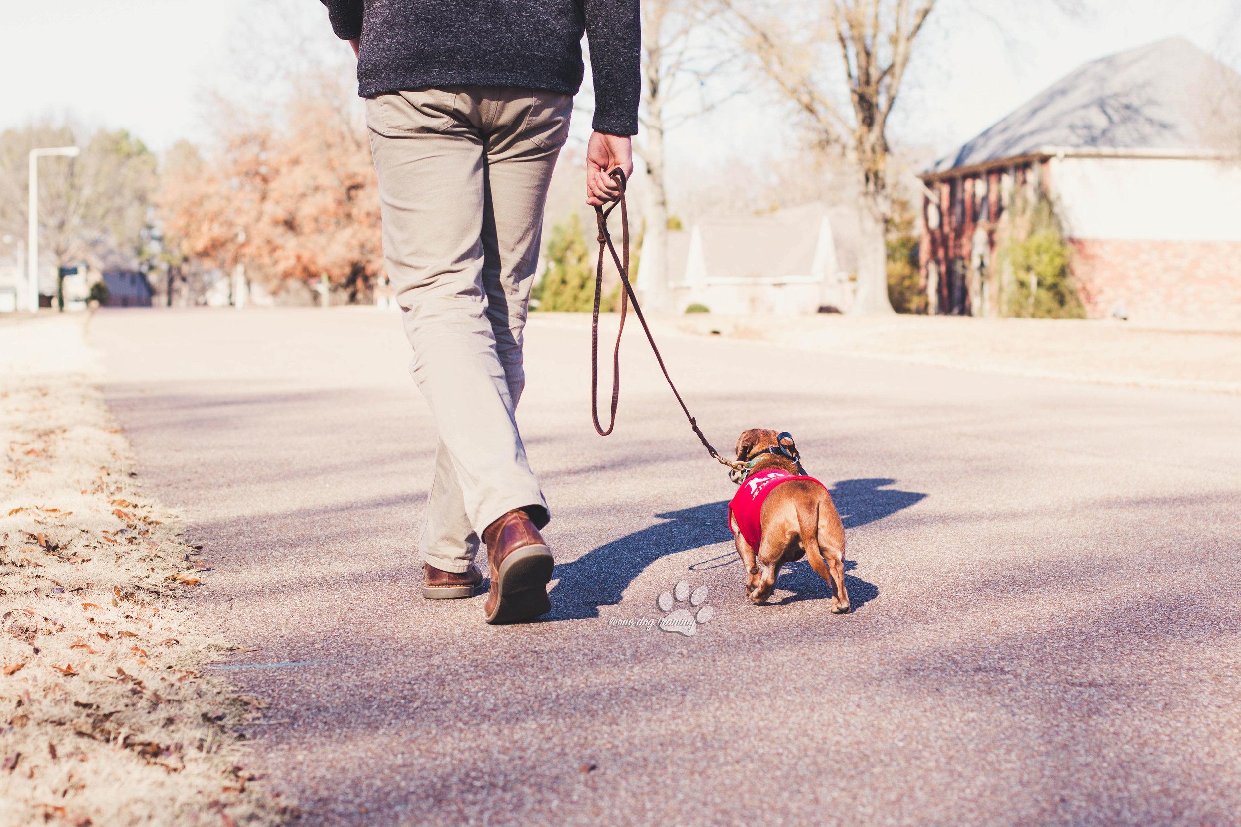 best_Dog_trainer_memphis