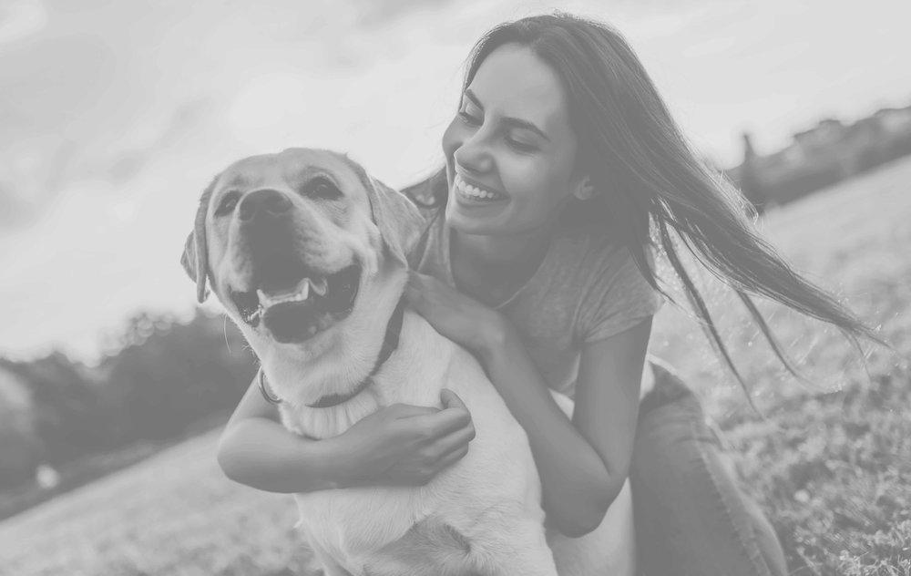 Wonder Dog Obedience Training