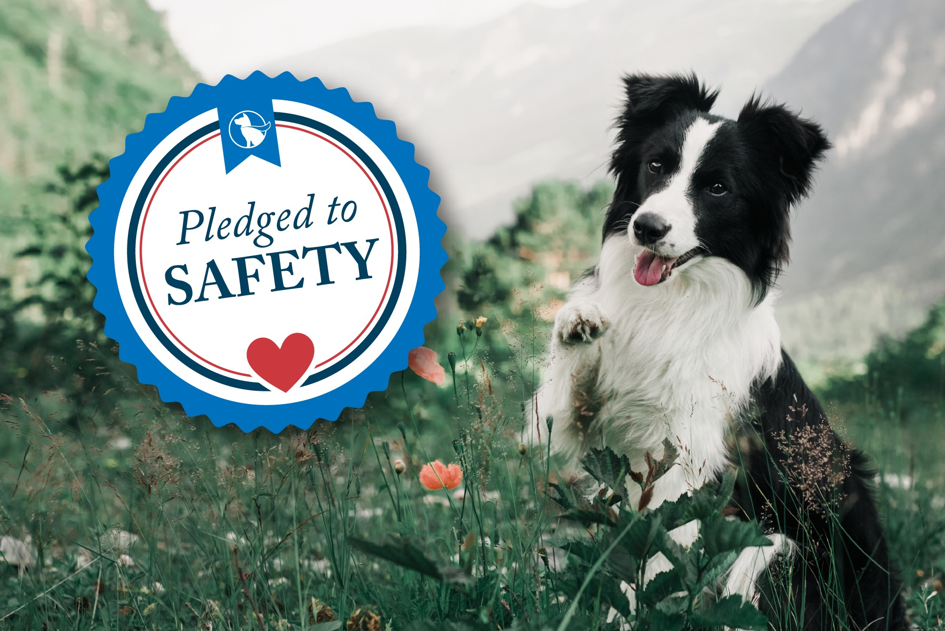 in-home-private-dog-training-lessons-safety-pledge.jpeg