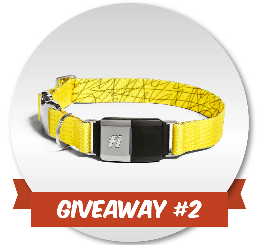 Give_Away-03.png