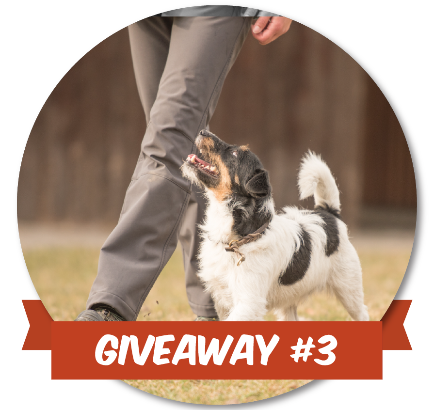 Give_Away-04.png