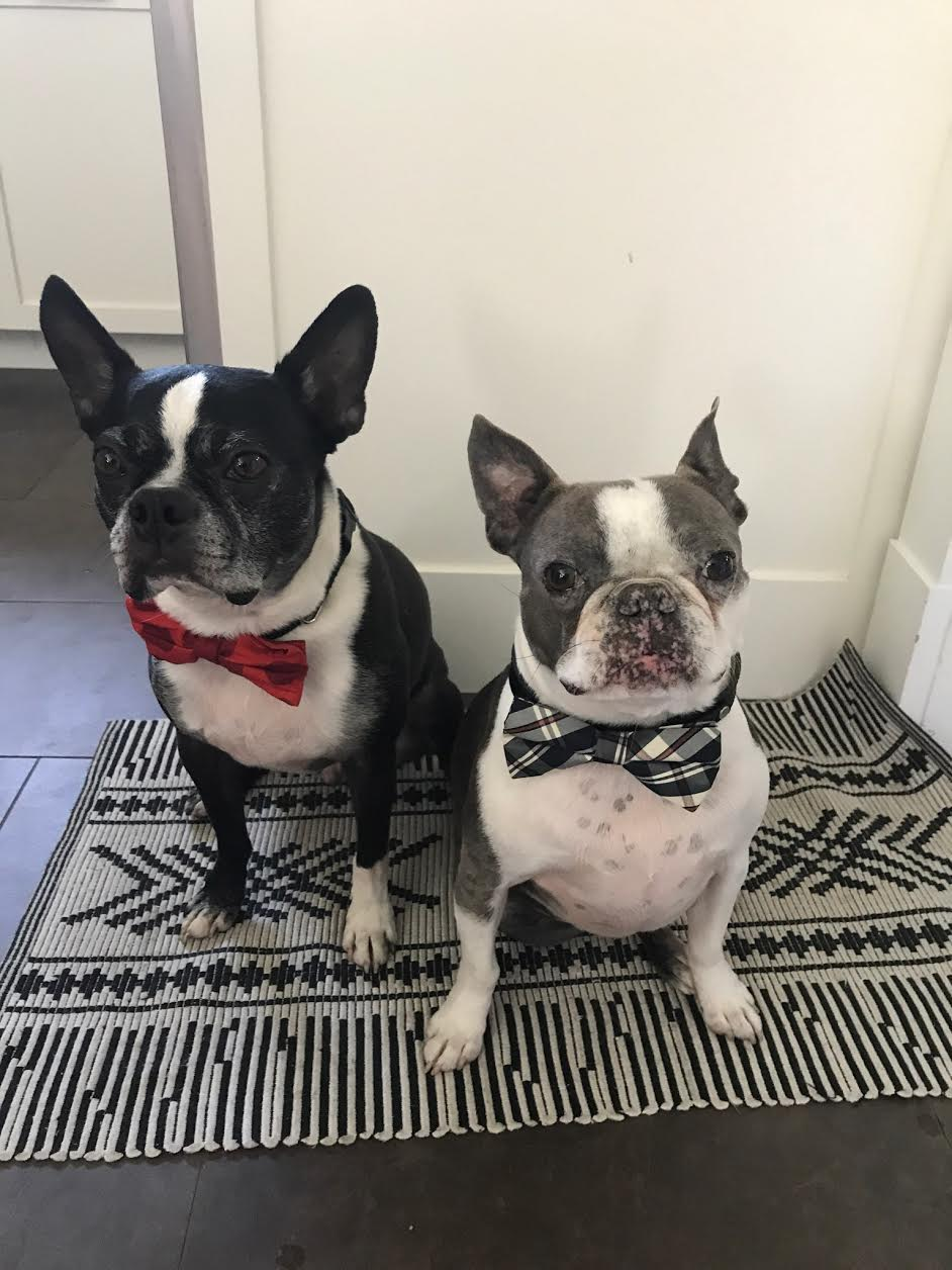 Briggs & Blue - Your dog butlers, cuddle aficionados, and lovers of treats and toys. Both prefer rum.
