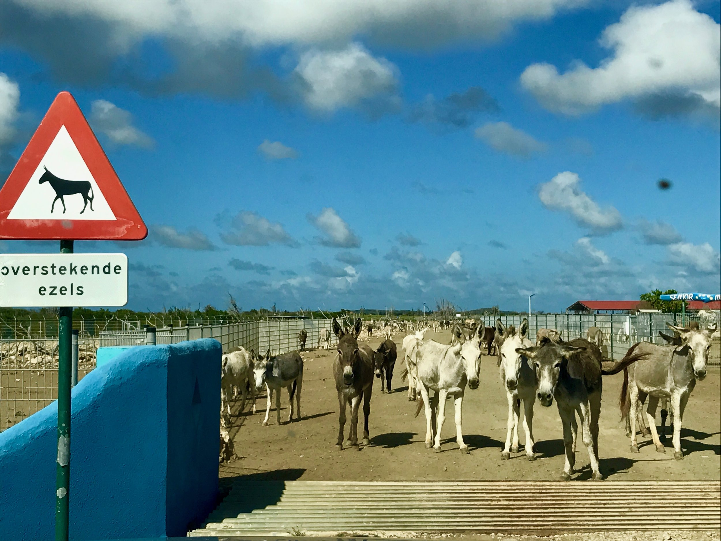 The Donkey Sanctuary - It's not a visit to Bonaire without a stop to meet our friendly local donkeys.