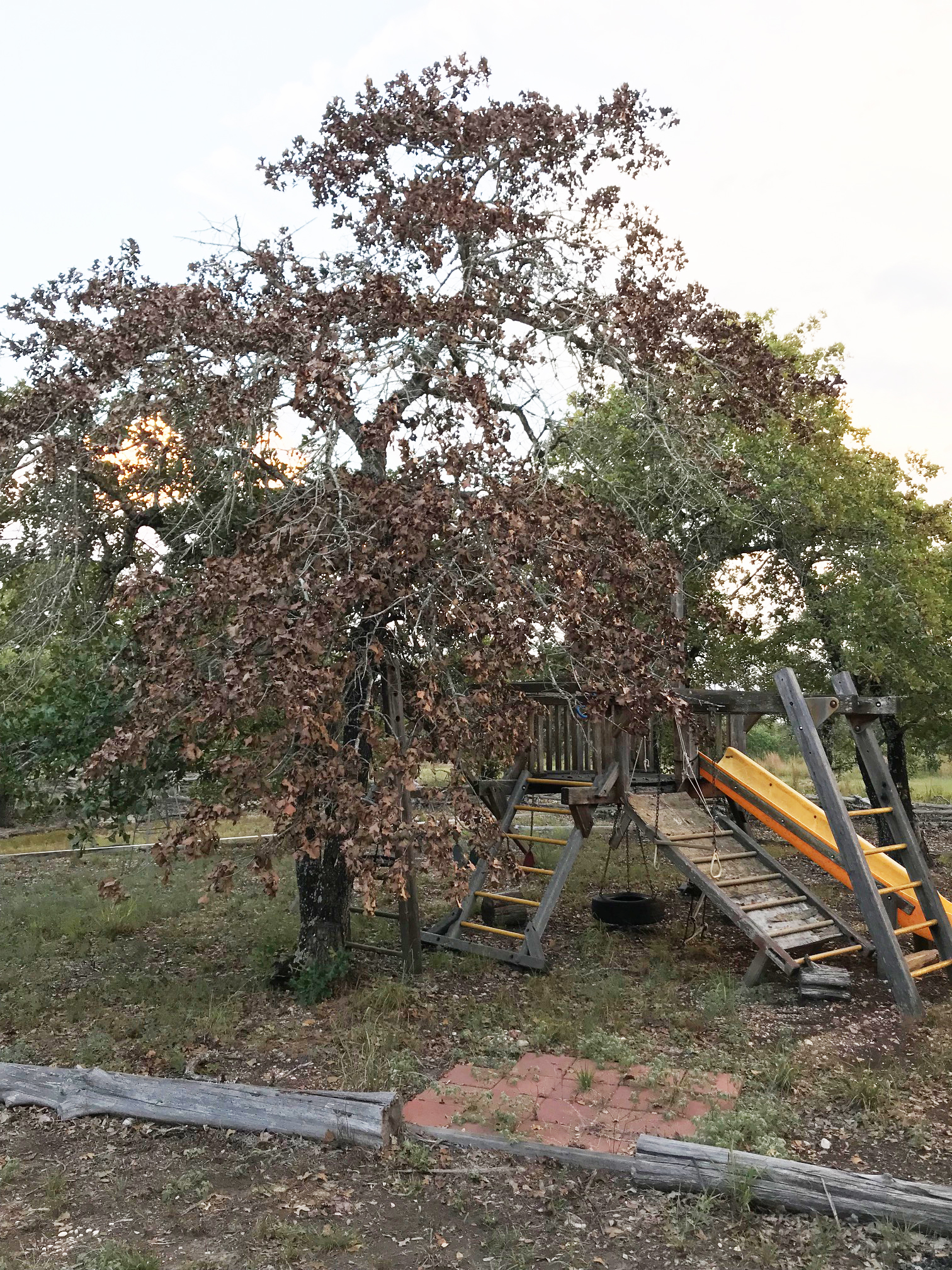 ranch tree fort.jpg