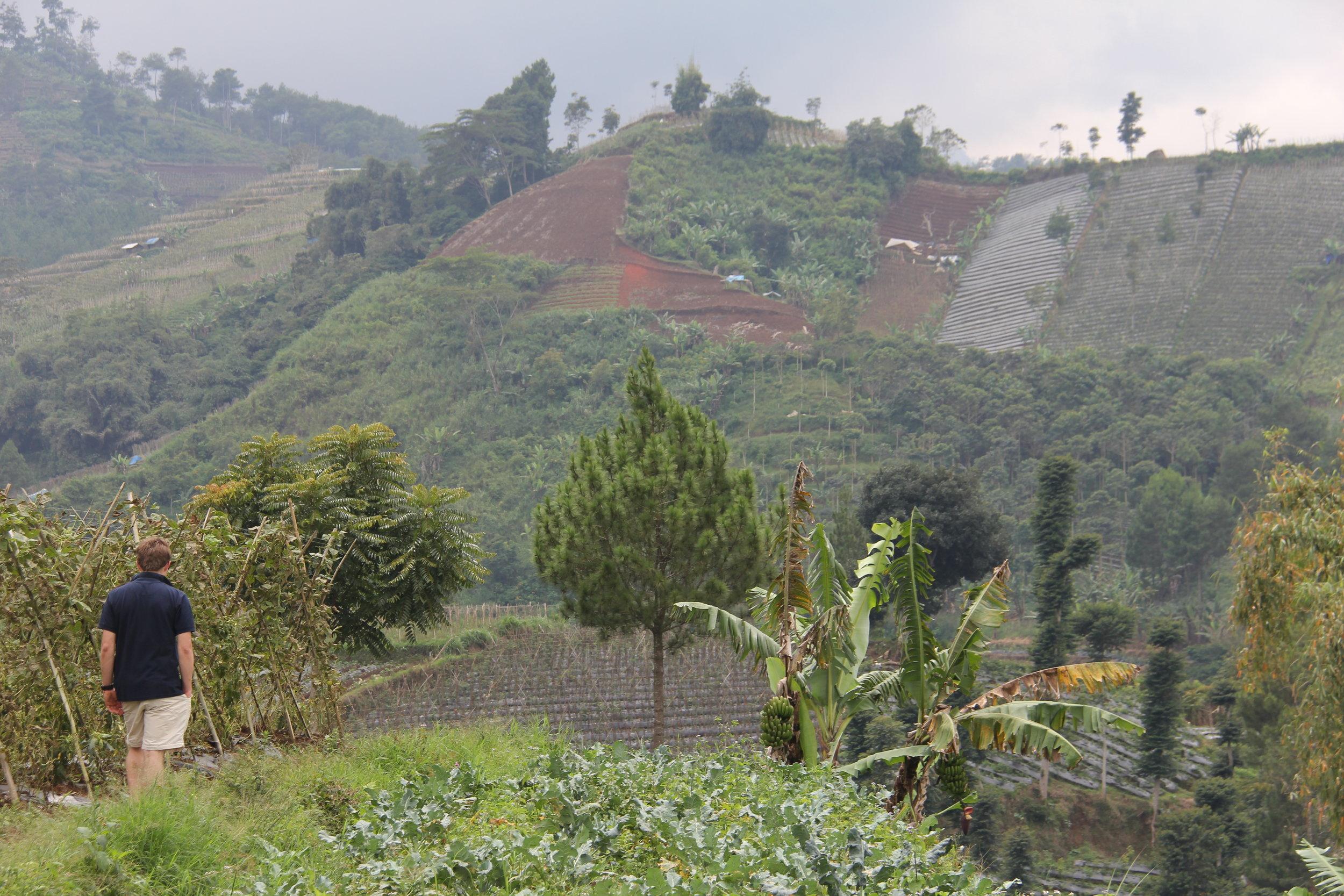 Mountainous farming area of Bandung Indonesia called Lembang