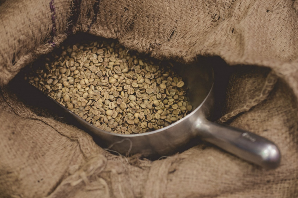 Green coffee beans, before roasting.  Courtesy Oso Negro Coffee