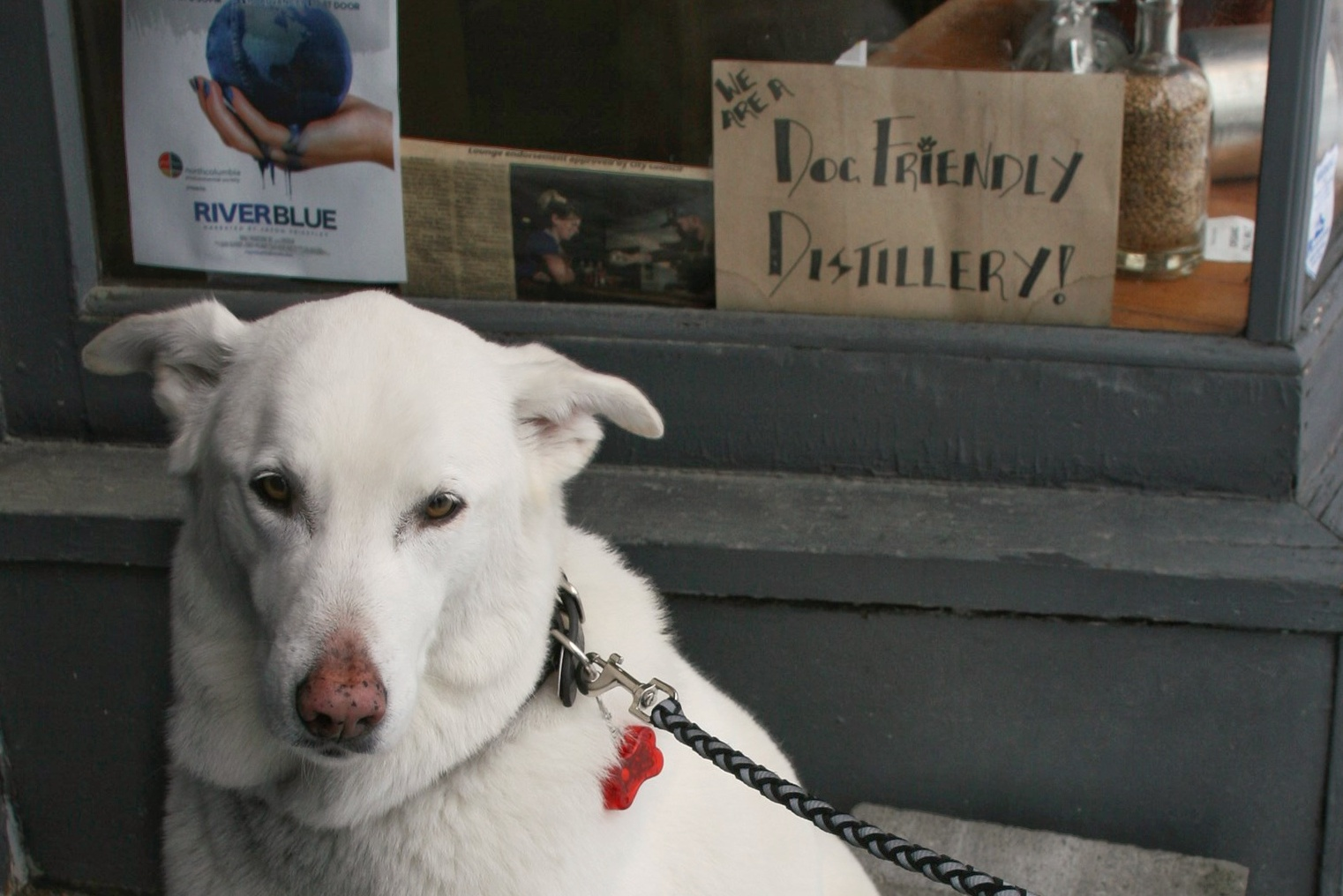 This guy loves dog-friendly distilleries. Can you blame him?  © Ski Travel Go