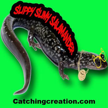 SlippySlimySalamander-2.jpg