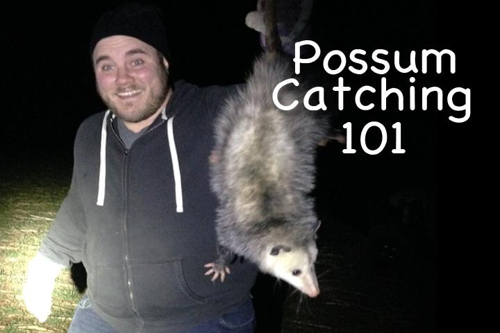 possumcatching101.jpg