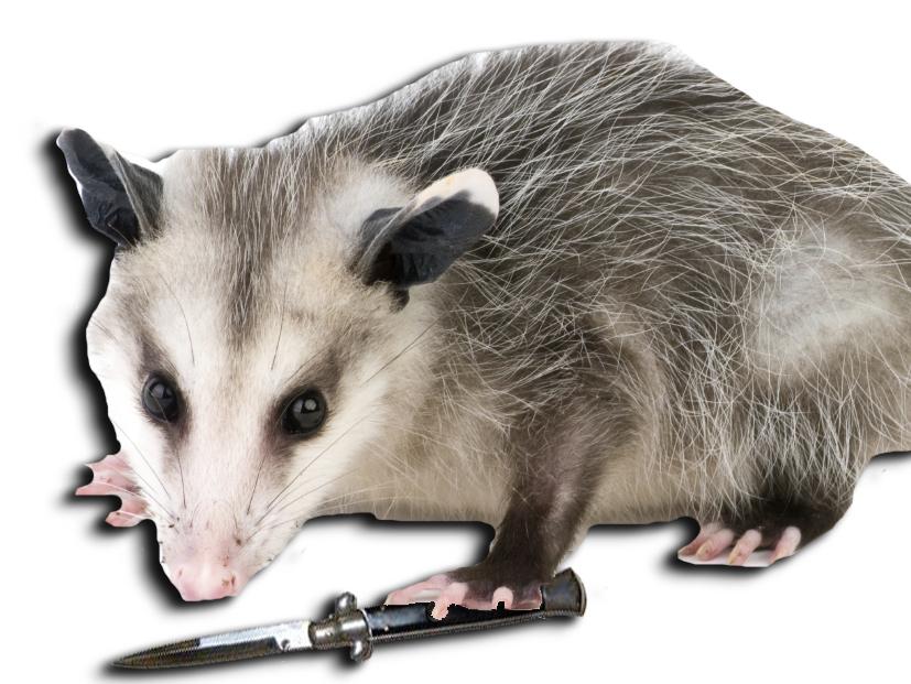 possum switchblade