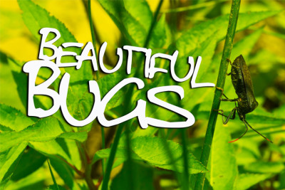 beautifulbugs-e1436318633896.jpg