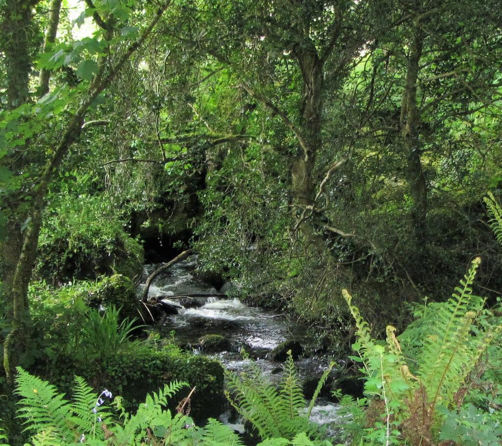 Brook waterfall.jpg