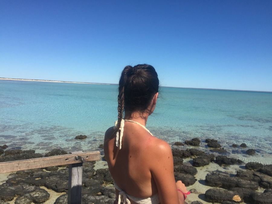 (Shark Bay - Australia)