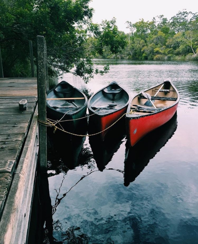 (The Everglades - Noosa)