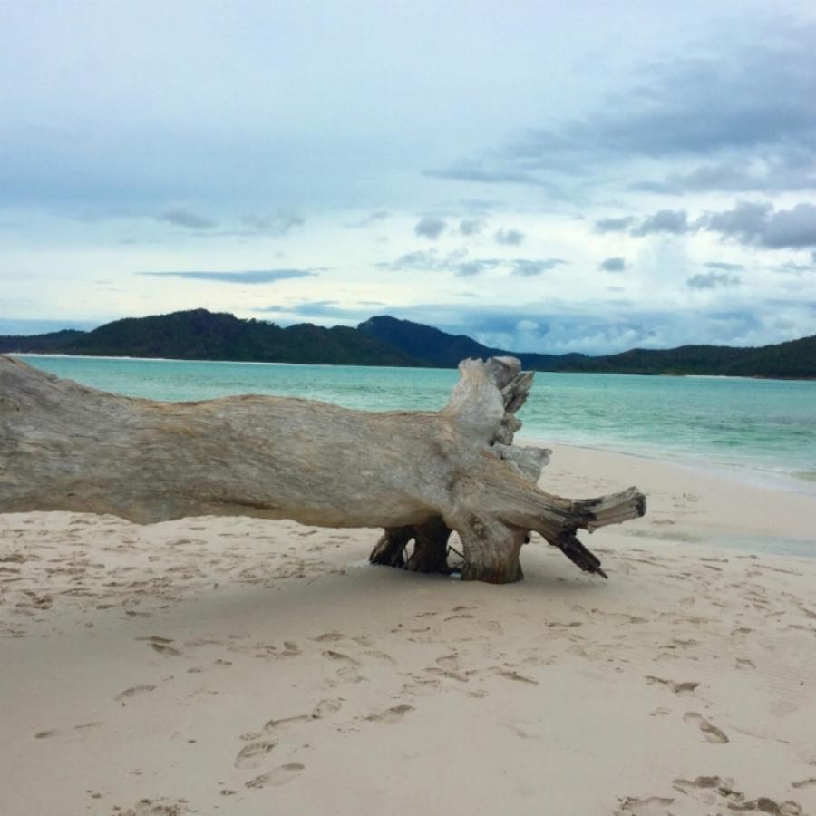 (White Haven Beach - Whitsundays)