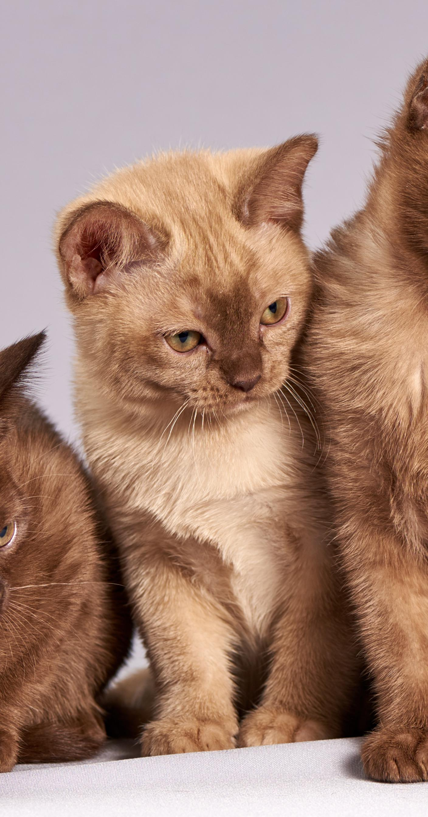 cat-301723_1crop.jpg