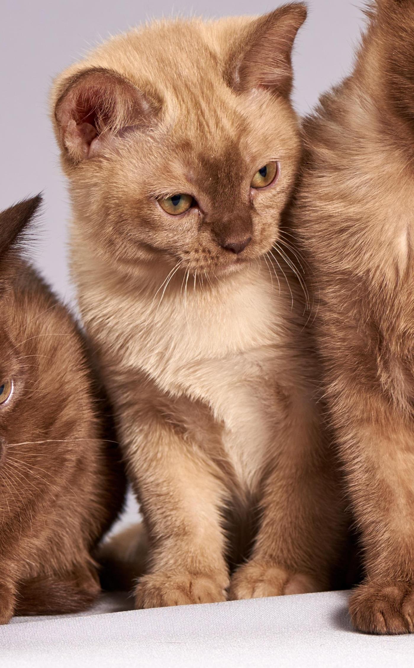 cat-301723_4crop.jpg