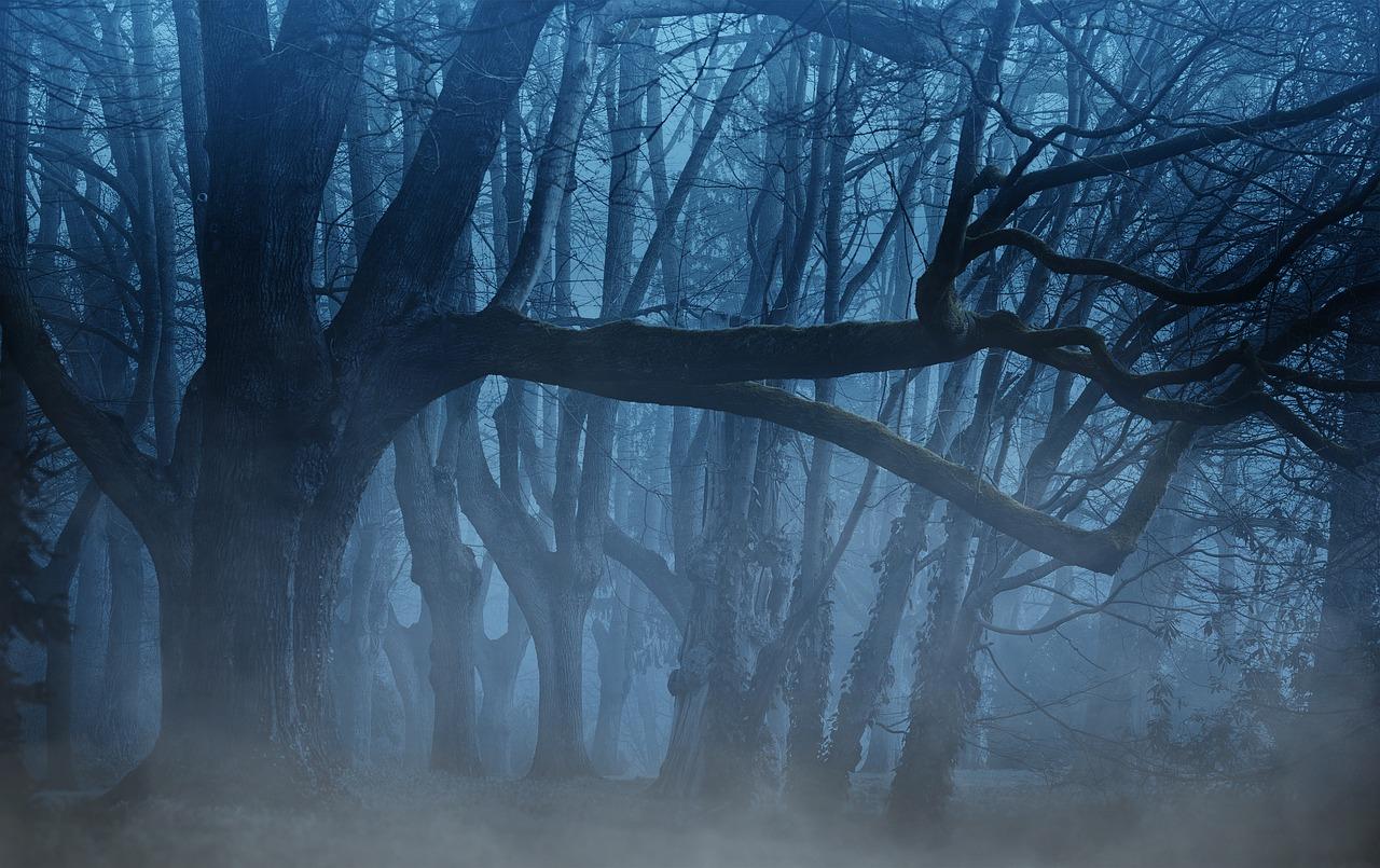 forest-3394066_1280.jpg