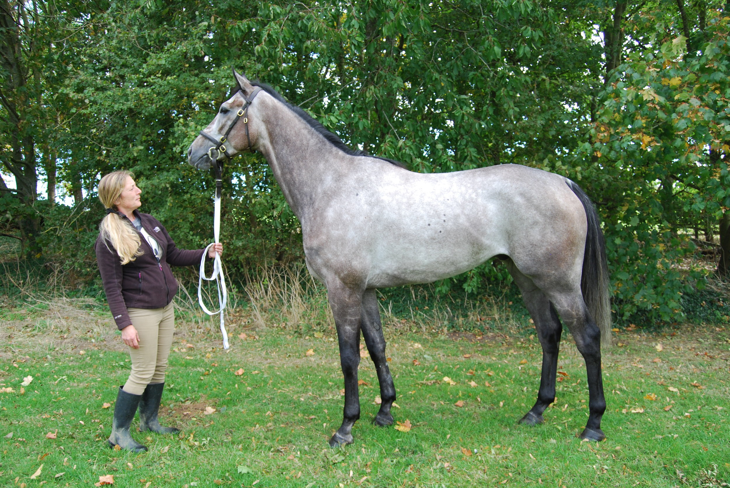 Standing tall - Starjac with his groom, Gail.