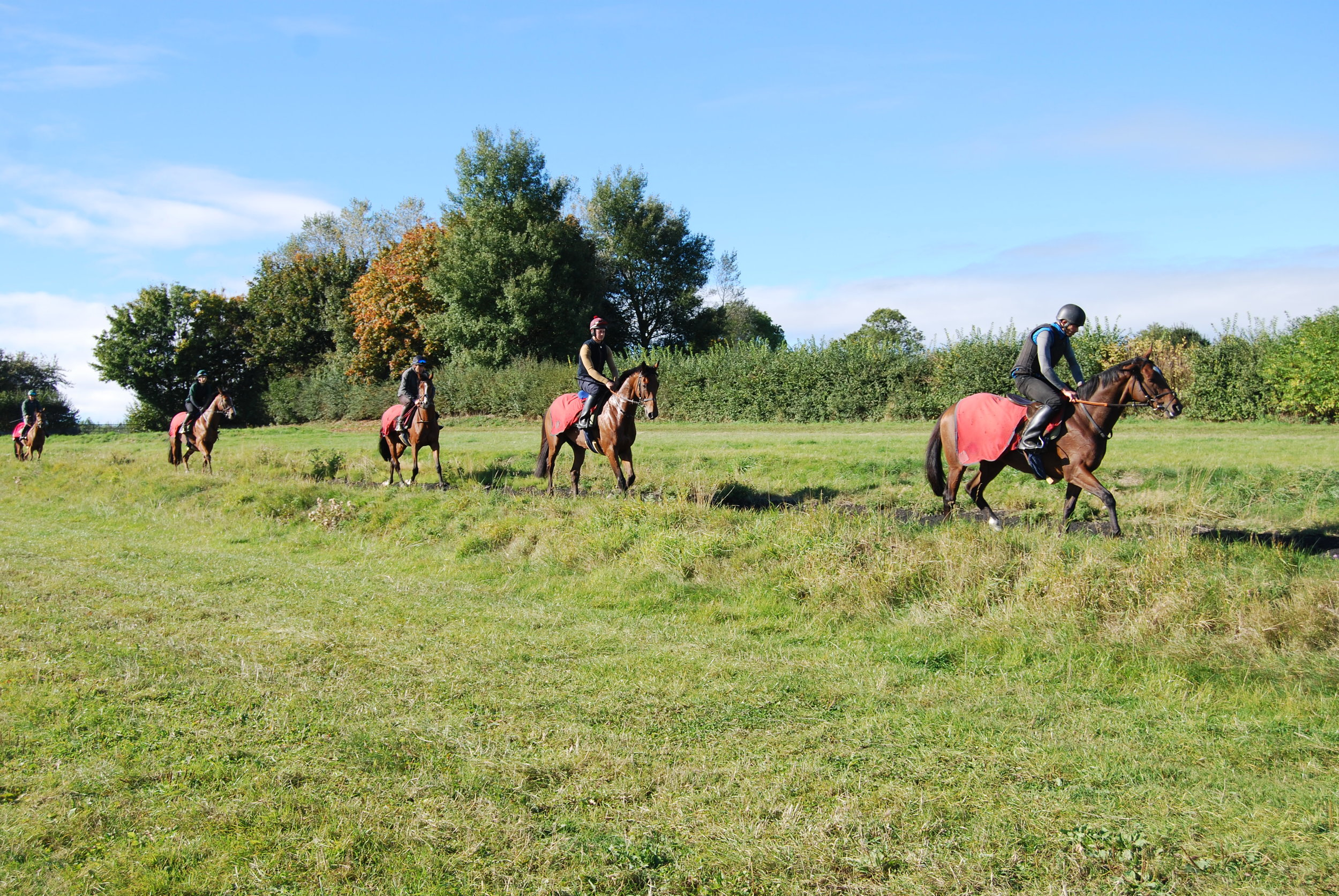 Cool down on the gallops.