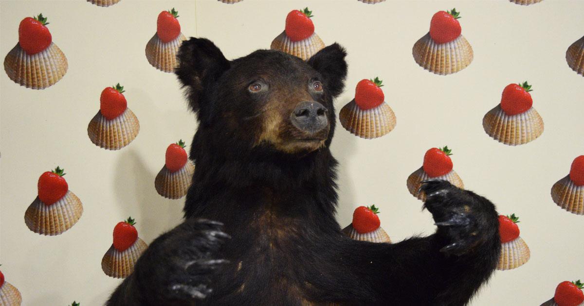 Seeing-Things-Bear.jpg