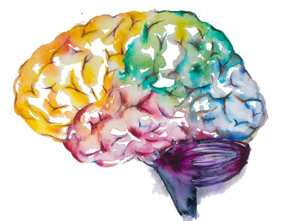 WANT TO TRAIN your brain? - Start training your body.