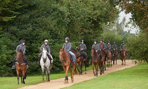 Horses in Training -