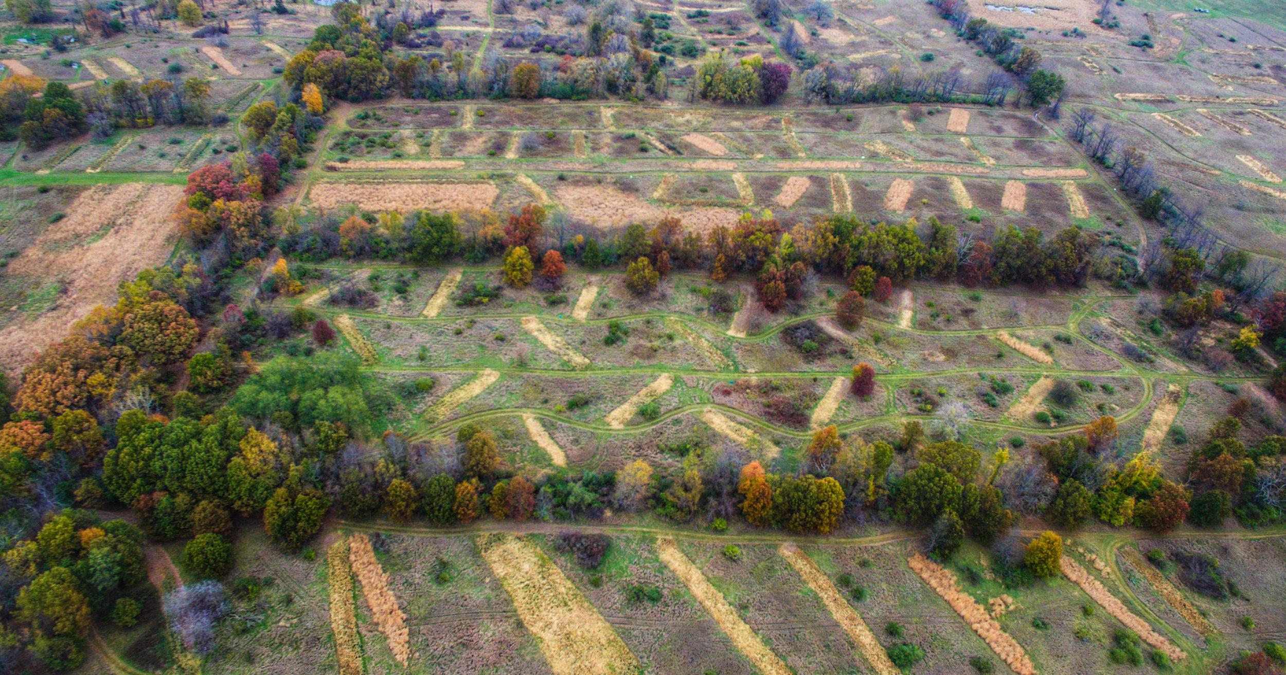 Fields_1.jpg